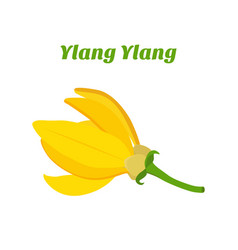 Tropical flower - ylang-ylang cananga vector