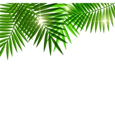 Leaves of palm tree vector image vector image