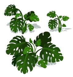 Dark green bushes of fern on white background vector image