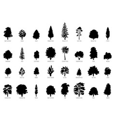 Big collection trees silhouettes isolated vector