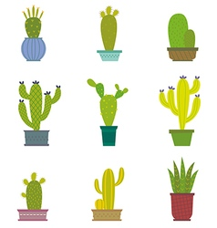 Cactus collection in vector image