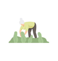 elderly woman caring for plants in the garden vector image