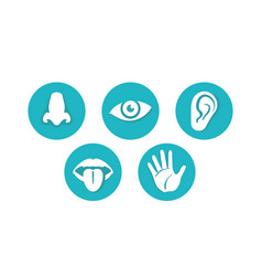 Five senses - touch sight hearing smell taste vector