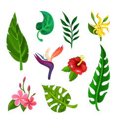 flat set of tropical blooming flowers and vector image