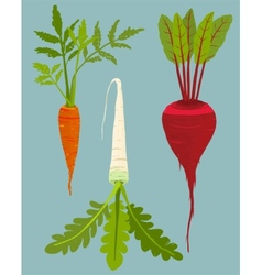 Growing Root Vegetables Set with Green Leafy Top vector image