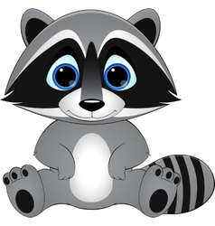 cute raccoon on white background vector image vector image