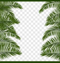 summer green palm leaf transparent vector image