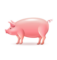 pig side view isolated on white vector image vector image
