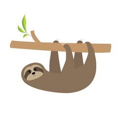 Sloth hanging on tree branch Cute cartoon vector image