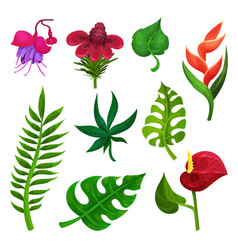 Flat set of various exotic flowers and vector
