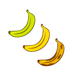 green ripe yellow old brown bananas banana vector image