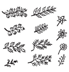 hand drawn branches with leaves isolated on white vector image