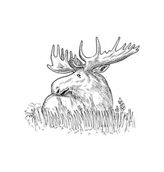 Moose or common european drawing vector