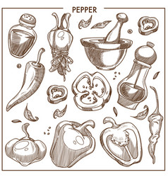 Pepper of all kinds isolated monochrome vector