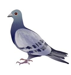 Pigeon or dove vector