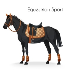 Horse with equestrian sport equipment vector image vector image