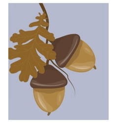 Acorn background with leaves vector