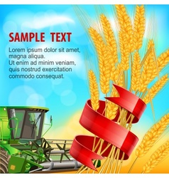 Ears of wheat with ribbon vector image