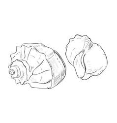 Sketch of shells vector
