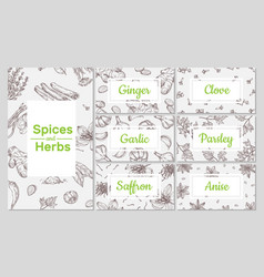 spices sketch hand drawn culinary organic herbs vector image