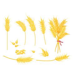 cartoon ripe gold wheat plant grain and ear vector image