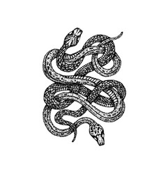 Dotwork two snakes vector