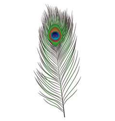 Peacock feather icon realistic style vector