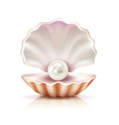 Shell pearl realistic isolated image vector