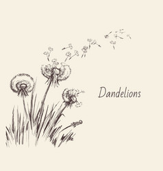 Dandelions flying seeds dandelion hand drawn vector