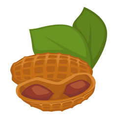 peanut in shell and leaves isolated nut organic vector image