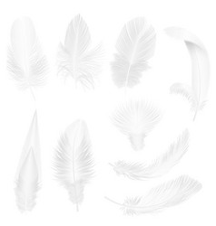 realistic soft white feathers isolated on white vector image