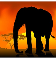 Elephant Silhouette Sunset vector image