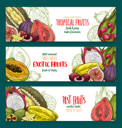 exotic fruit sketch banner set of tropical berry vector image