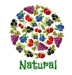 Natural fruits and berries in a shape of circle vector image vector image