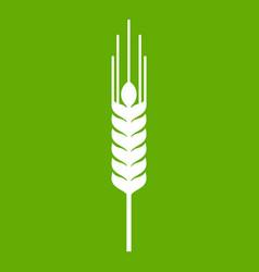 Stalk of ripe barley icon green vector