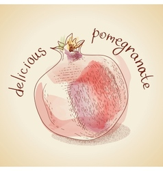 vintage pomegranate vector image vector image