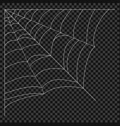 cobweb spider web vector image