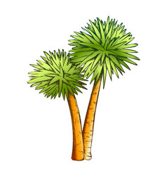 Sabal palm exotic tropical trees color vector