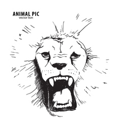 Sketch lion head vector image
