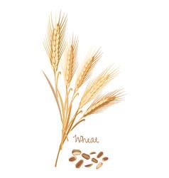 Wheat with leaves stems grain food ingredient vector