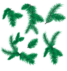 fir tree branch christmas spruce evergreen vector image vector image