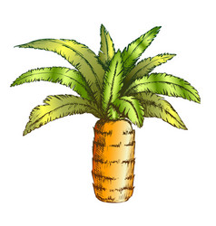 pineapple palm tropical tree color vector image