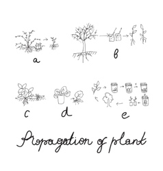 Plant reproduction or propagation set vector