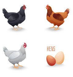 Set of hens different breed with eggs isolated vector image vector image