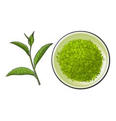 hand drawn bowl of matcha powder and green tea vector image