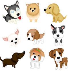 dog breeds vector image