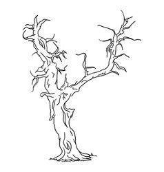old tree vector image