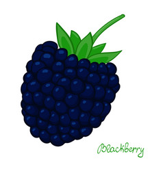 Ripe blackberry isolated dewberry on white vector