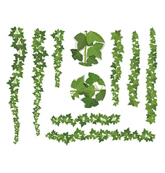 set brushes ivy vine branches vector image