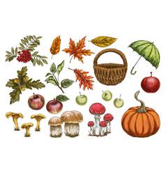 Set in autumn style leaves acorns berries vector